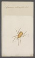 Gamasus - Print - Iconographia Zoologica - Special Collections University of Amsterdam - UBAINV0274 072 02 0002.tif