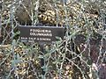 Gardenology.org-IMG 0460 hunt07mar.jpg
