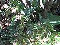 Gardenology.org-IMG 1179 rbgs10dec.jpg
