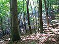 Gehofen Hohe Schrecke Wald.jpg