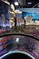 Genoa - aquarium 12.jpg