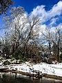 Georgia snow IMG 4849 (27170221559).jpg