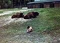 Gera - Tierpark Wisente 80er.jpg