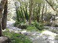 Gimello - creek - 03.jpg