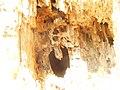 Glasowbachniederung Selchower-See 152.jpg