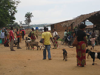 Kindu - Local people offering goats for sale.