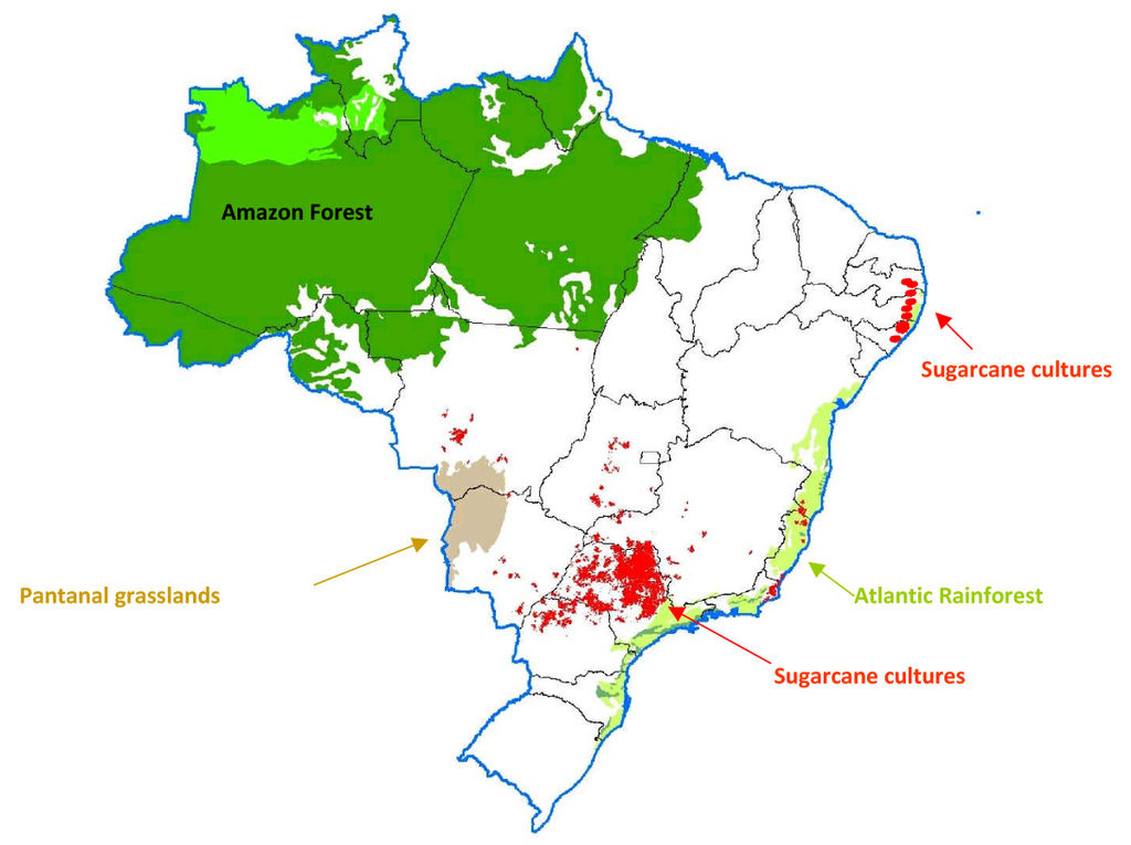 Brazil Sustainable Coffee Farming