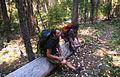 Grayback Mountain (15799251026).jpg