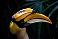 Great Indian Hornbill. (8065420916).jpg