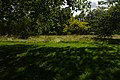 Green Park, London-2016-07-02.jpg