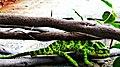 Greenchem.jpg