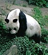 list of zoos in germany wikipedia. Black Bedroom Furniture Sets. Home Design Ideas
