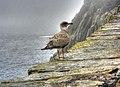 Gull2 (8045665463).jpg