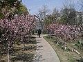 Gulou, Nanjing, Jiangsu, China - panoramio (10).jpg