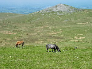 Carneddau - Wild ponies on the flanks of Drosgl