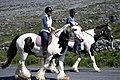 Hästar på Aran-5093 - Flickr - Ragnhild & Neil Crawford.jpg