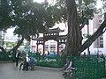 HK 油麻地社區中心休憩花園 Yau Ma Tei Community Centre Rest Garden 榕樹頭 Yung Shue Tau 2009-12-19 Shanghai Street.JPG