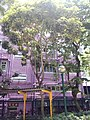 HK 西營盤 Sai Ying Pun 第三街遊樂場 Third Street Playground 公園 LCSD park green plants n trees August 2017 Lnv2 19.jpg