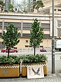 HK TKL 調景嶺 Tiu Keng Leng 彩明街 Choi Ming Street 福樹 trees flying Eagle picture ads sign March 2018 LGM 01.jpg
