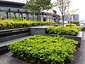 HK TKL 調景嶺 Tiu Keng Leng 翠嶺路 Chui Ling Road terrace outdoor garden December 2018 SSG 01.jpg