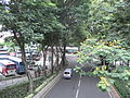 HK TST Urban Council Centenary Garden 加連威老道 Granville Road trees.JPG