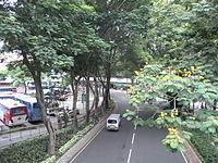 HK TST Urban Council Centenary Garden 加連威老道 Granville Road trees.JPG