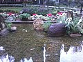 HK Tai Kok Tsui 樂群街公園 Lok Kwan Street Park water pool view golden fishes Dec-2012.jpg