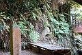 Habitat of Histiopteris incisa Yunomine Hot spring district A.jpg