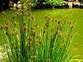 Hakone Gardens, Saratoga, CA - IMG 9232.JPG