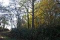 Hale Park Wood - geograph.org.uk - 1568569.jpg