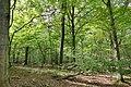 Hambacher Forst bei Morschenich DE 2018-09-09 A.jpg