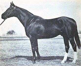 Hamburg (horse) - Image: Hamburg (horse)
