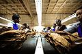 Handmade cigar production, process. Tabacalera de Garcia Factory. Casa de Campo, La Romana, Dominican Republic (1).jpg