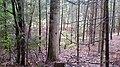 Hasengraben Herbst 2015 - panoramio.jpg