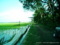 Helmi Rahim (Daerah Persawahan Kec. Patampanua. Palirang) - panoramio.jpg