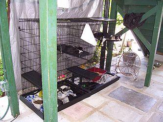 Hemingway House kitten cage.jpg