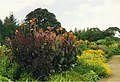 Herbaceous border at Rosemoor Garden, Devon - geograph.org.uk - 349609.jpg