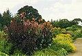 Herbaceous border at Rosemoor Garden, Devon - geograph.org.uk - 349609.jpg