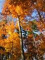 Herbstgold - panoramio.jpg