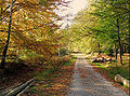 Hertogenwald - Eupen.jpg