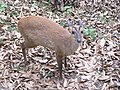 Himalayan Zoo, Darjeeling (7168725187).jpg