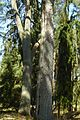 Hirschgehege im Forst Rundshorn-Fuhrberg 01.jpg