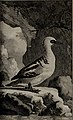 Histoire naturelle des oiseaux (1781) (14748108751).jpg