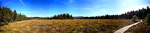 Torfhaus - View over the raised bog to the Brocken