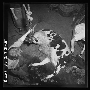 Slaughterhouse - Workers and cattle in a slaughterhouse in 1942.