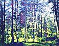 Holzschnitt-Joachim-Feldmeier-H0930.jpg