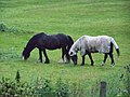 Horses, Thurstaston - geograph.org.uk - 1405570.jpg