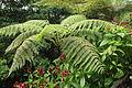 Huge fern (23383145084).jpg