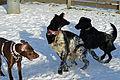 Hundebegegnungszone Kaprun 12.JPG