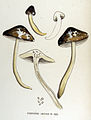 Hygrophorus limacinus — Flora Batava — Volume v17.jpg
